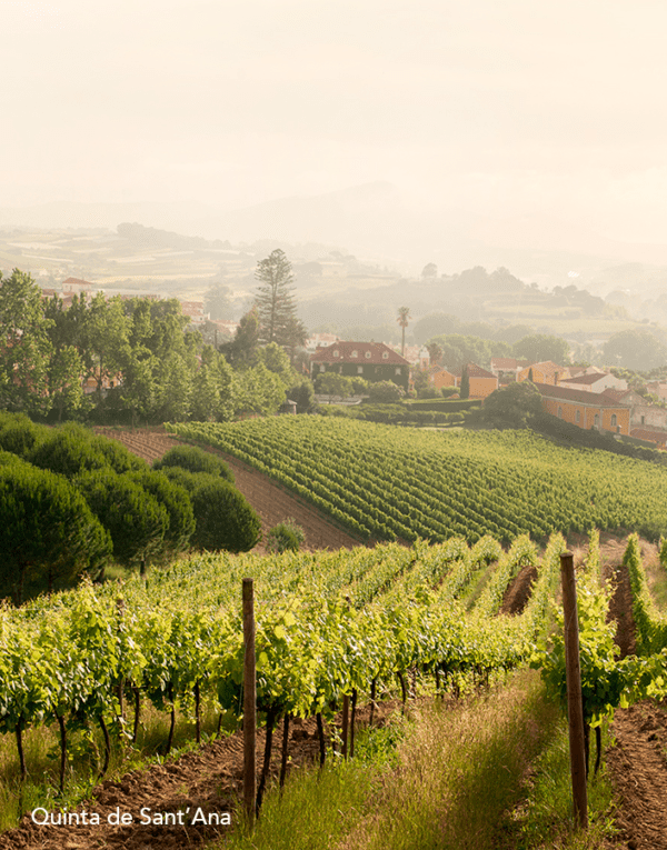 Lisbon Family Vineyards - Quinta de Sant'Ana